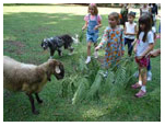"""Dyed 'N Wool"" : Sheep Visits &  Fiberarts Activities for kids"